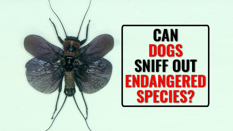 Can Dogs Sniff Out Endangered Species?