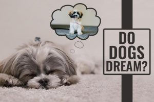 Do Dogs Dream – Let Sleeping Dogs Lie!