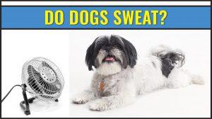 Do Dogs Sweat?