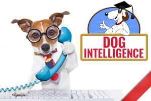 Dog Intelligence