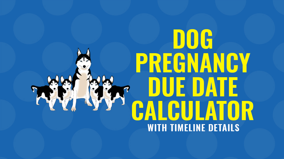 Date my due dog for Vaccinations Schedule