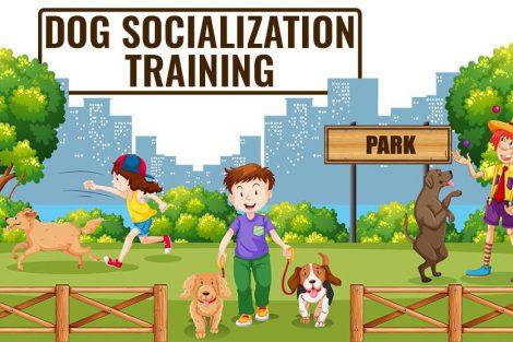Dog Socialization Training