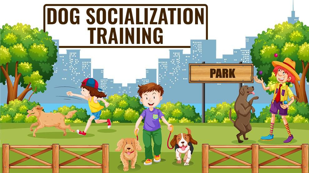 Dog Socialization Training