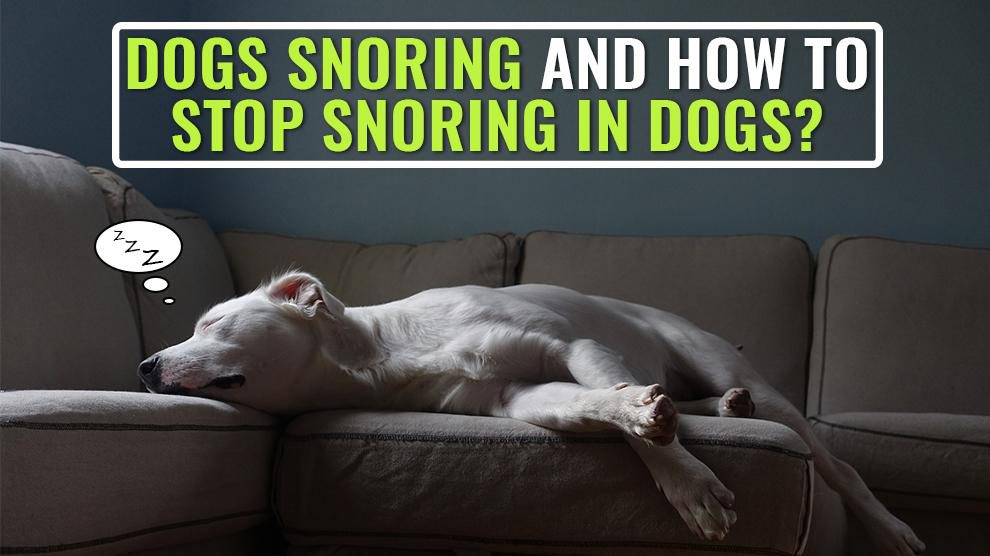 Dogs Snoring And How To Stop Snoring In Dogs?
