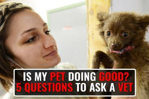 Questions Every Pet Lover Should Ask His Vet