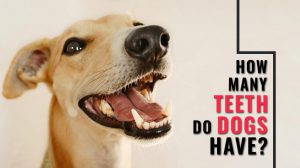 How Many Teeth Do Dogs Have?