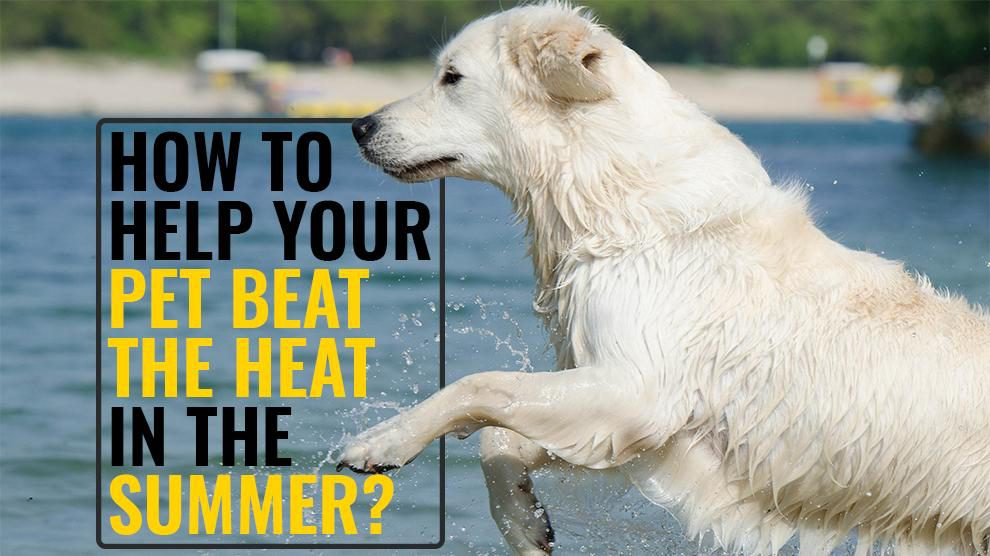How To Help Your Pet Beat The Heat In The Summer?