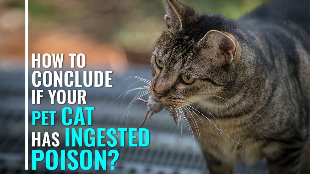 Rat Poisoning In Cats