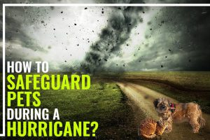 Hurricane Safety Tips For Pets