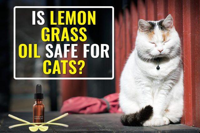 Is Lemongrass Oil Safe For Cats?