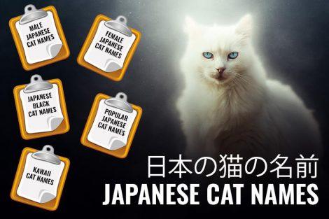 Japanese Cat Names