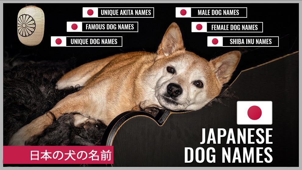 27+ Cute male dog names japanese info