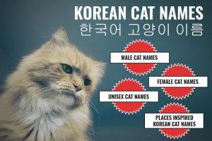Korean Cat Names