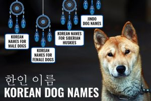 Korean Dog Names