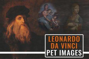 Leonardo Da Vinci Animal Drawings