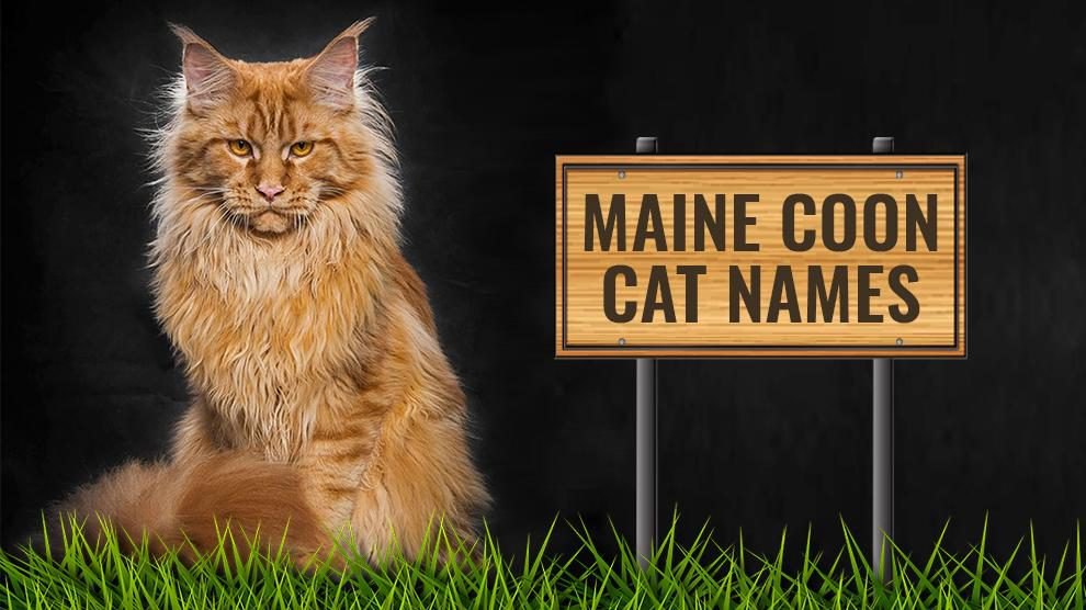 Maine Coon Cat Names