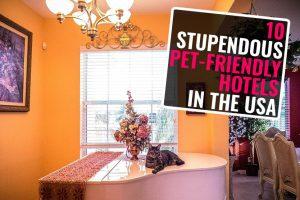 Pet-Friendly Hotels In America