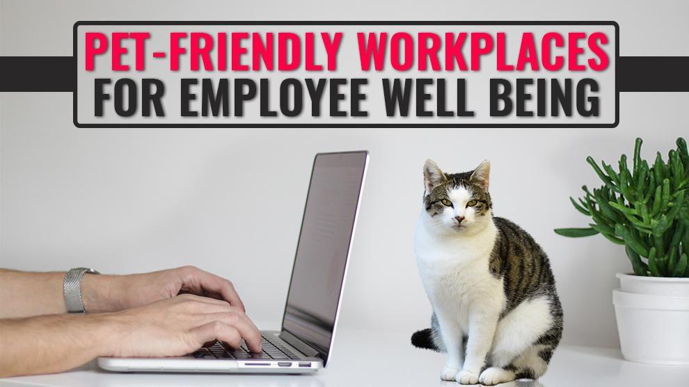 Pet Friendly Workplace