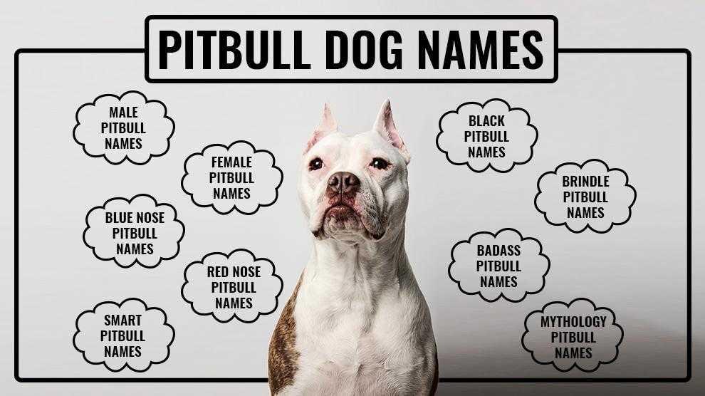 Pitbull Names Unique And Tough