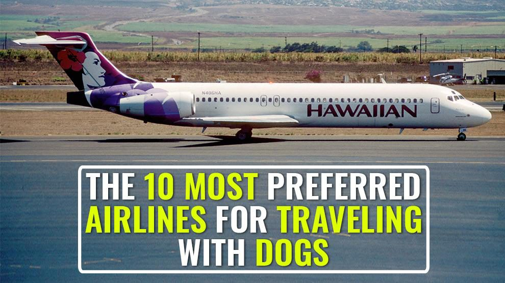 The 10 Most Preferred Airlines for Traveling With Dogs