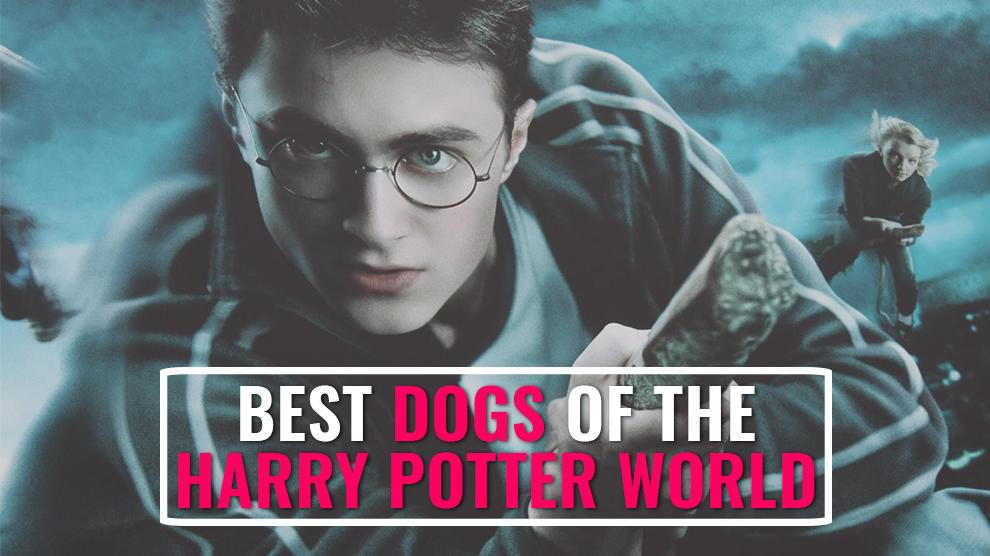 Best Dogs Of The Potter World