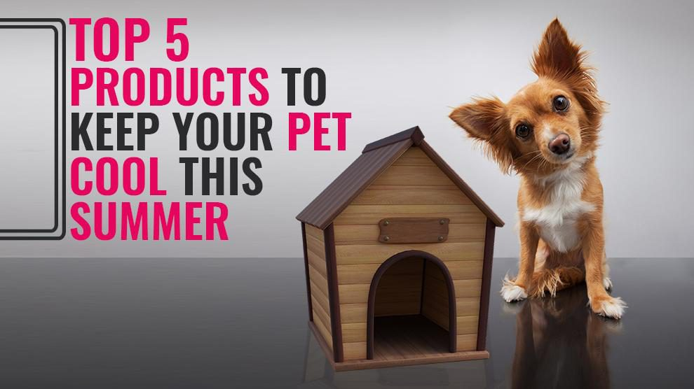 Top 5 Products To Keep Your Pet Cool This Summer
