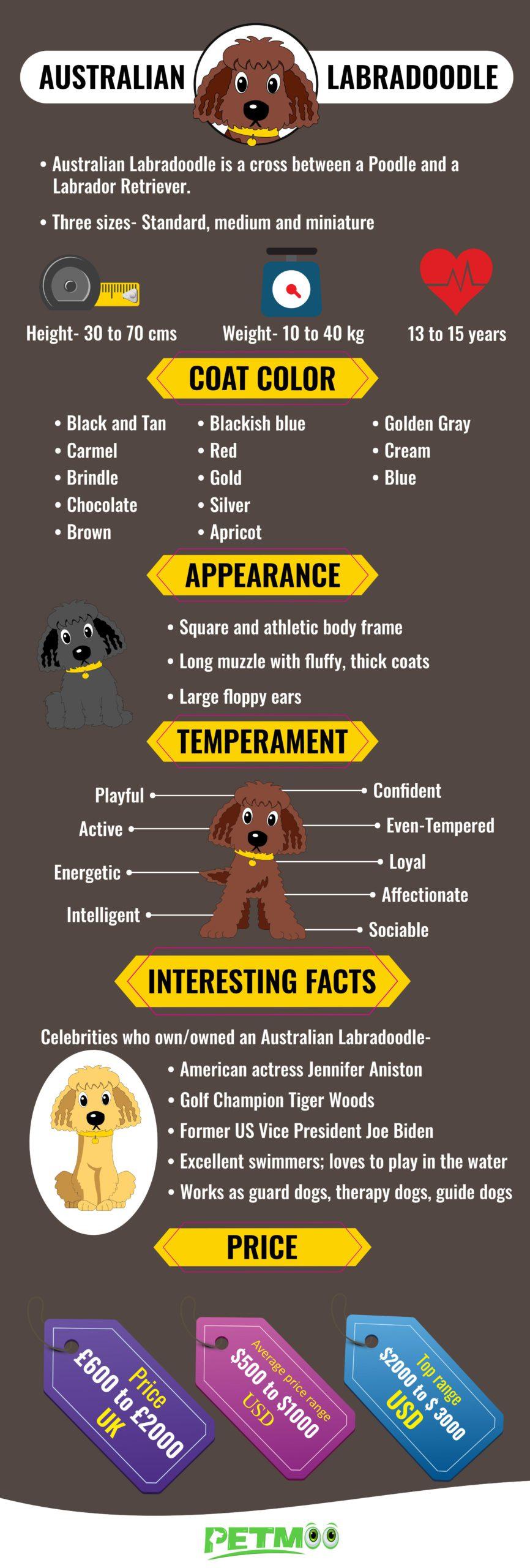 Australian Labradoodle Infographic
