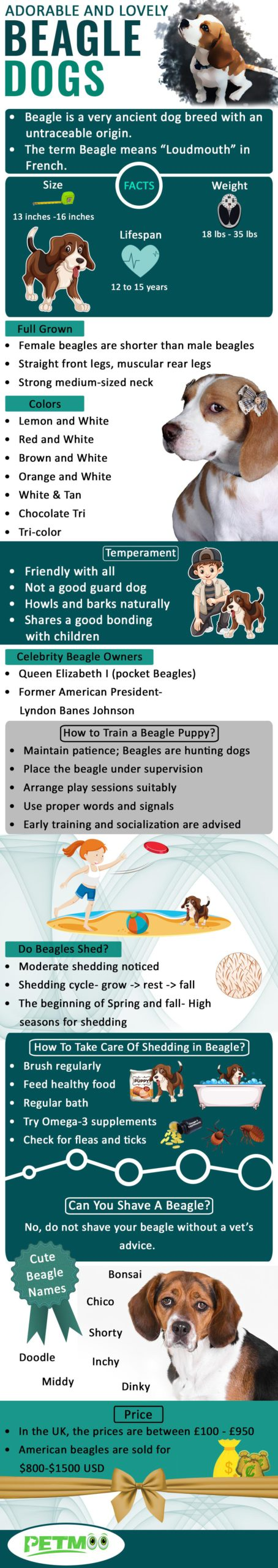Beagle Dogs Infographic