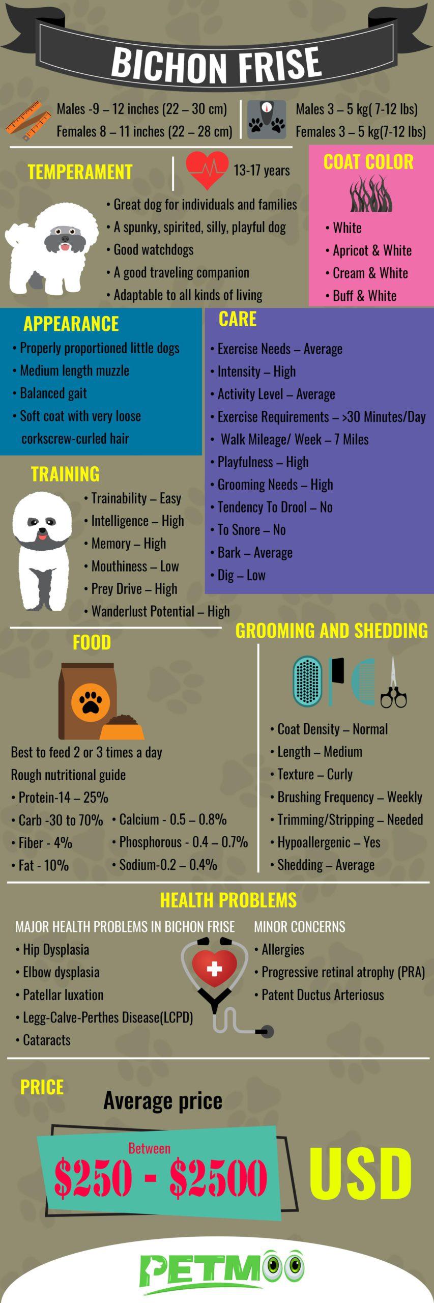 Bichon Frise Infographic