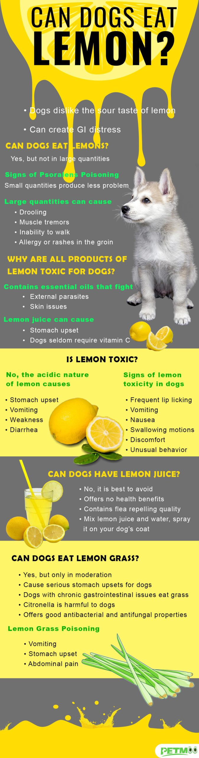 Can Dogs Eat Lemon Infographic