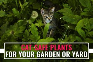 Cat Safe Plants
