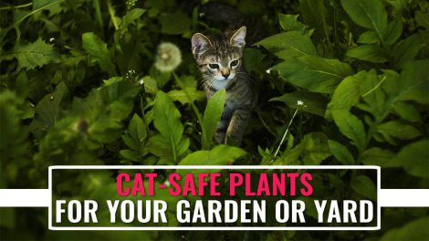 Cat Safe Plants