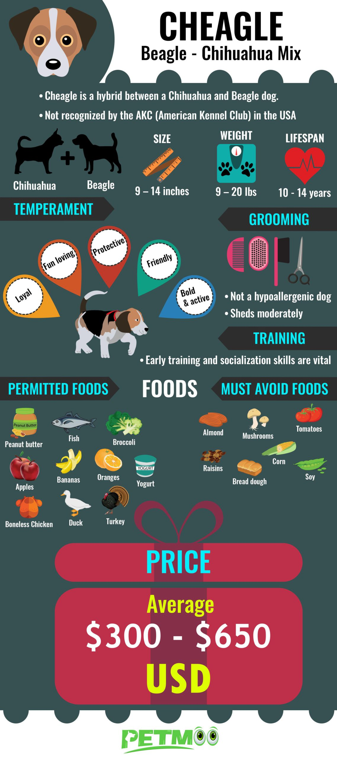 Cheagle Infographic