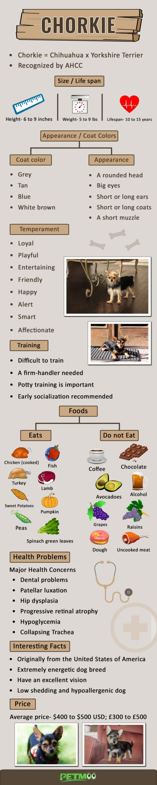 Chorkie Infographic