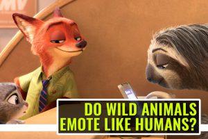 Do Wild Animals Emote Like Humans?