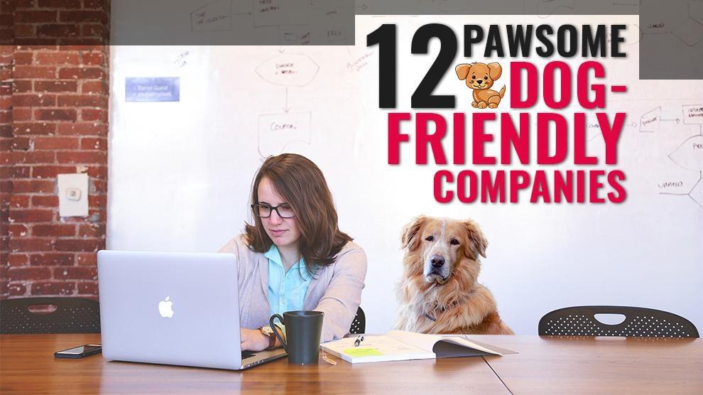 Dog Friendly Companies