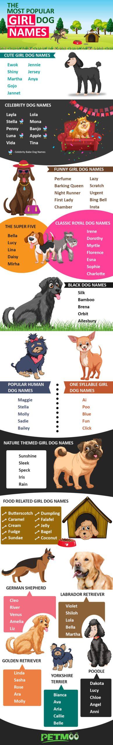 Girl Dog Names Infographic