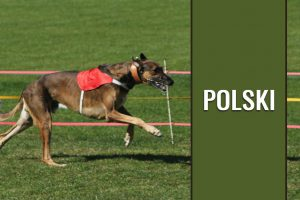 Chart Polski - Polish Greyhound