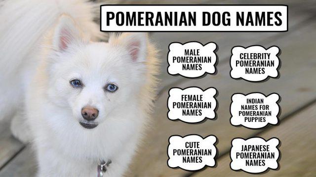 Pomeranian Dog Names