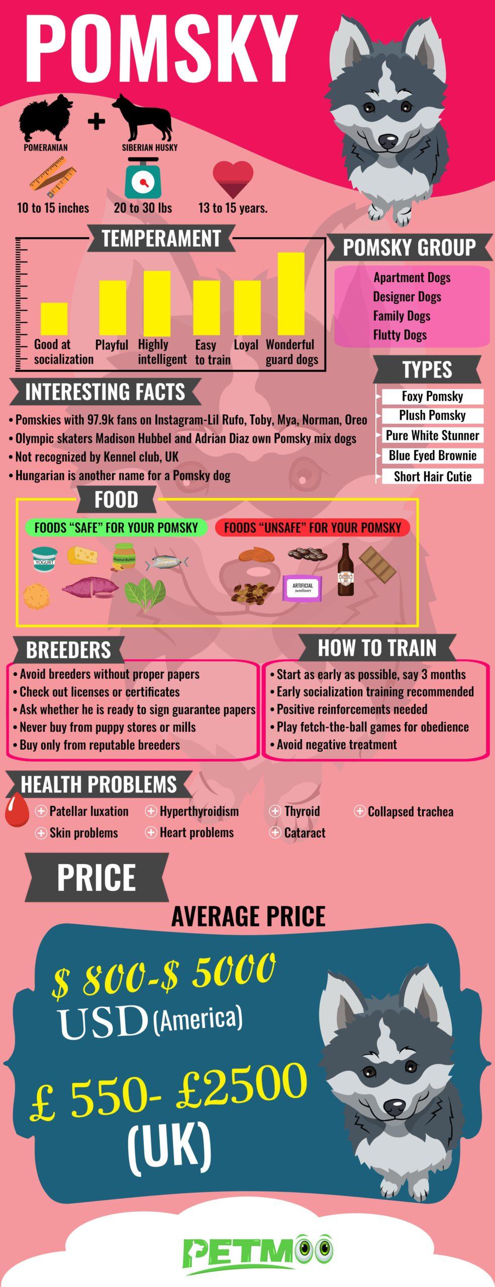 Pomsky Infographic