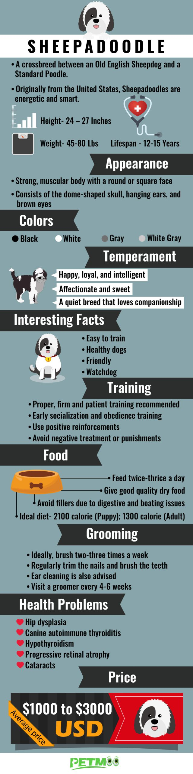 Sheepadoodle Infographic