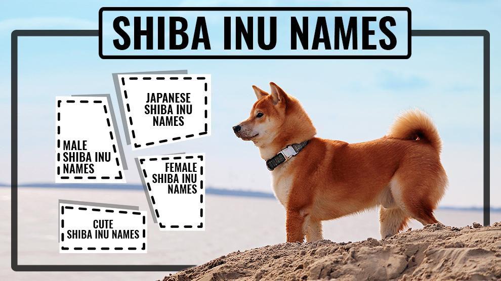 Shiba Inu Names