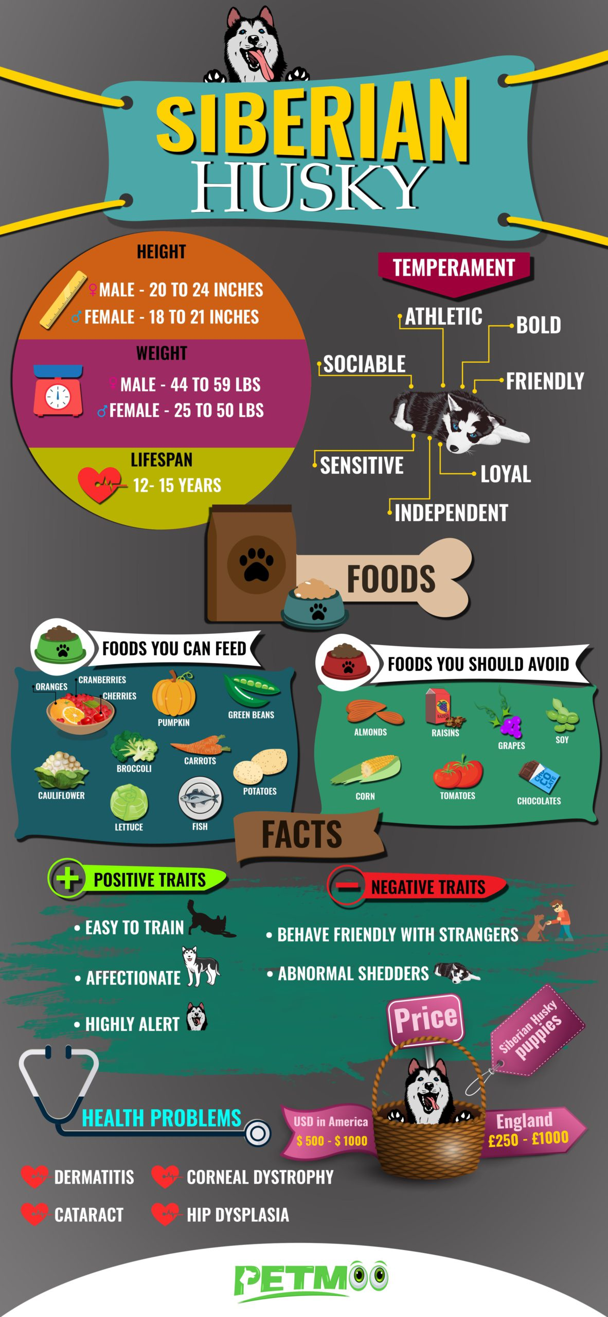 Siberian Husky Infographic
