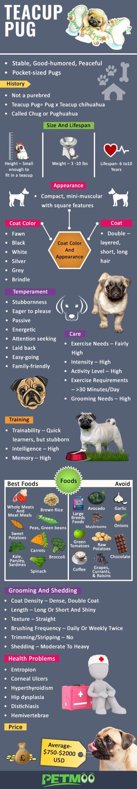 Teacup Pug Infographic