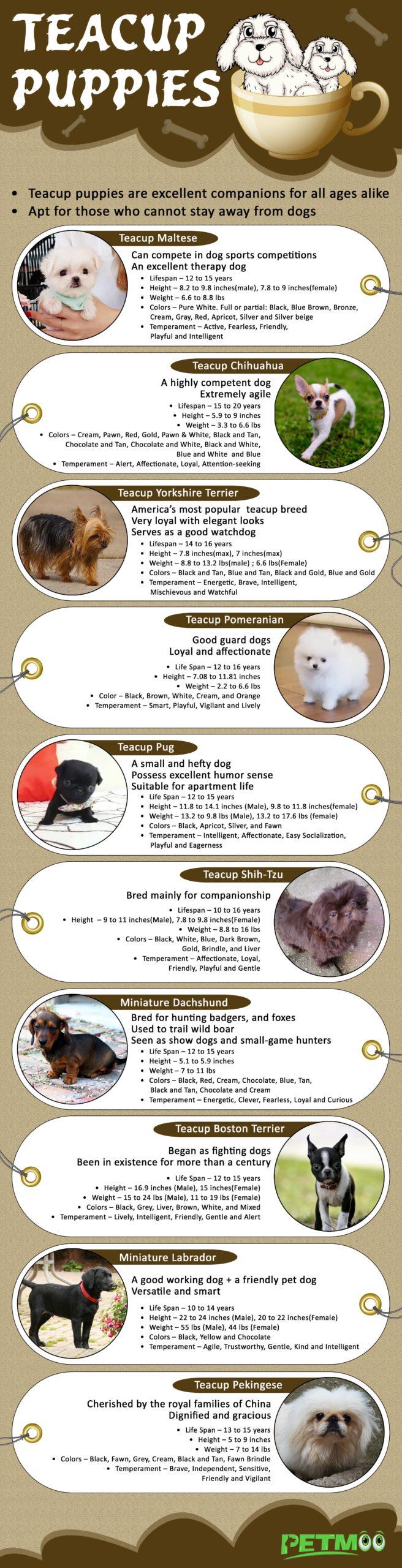 Teacup Puppies Infographics