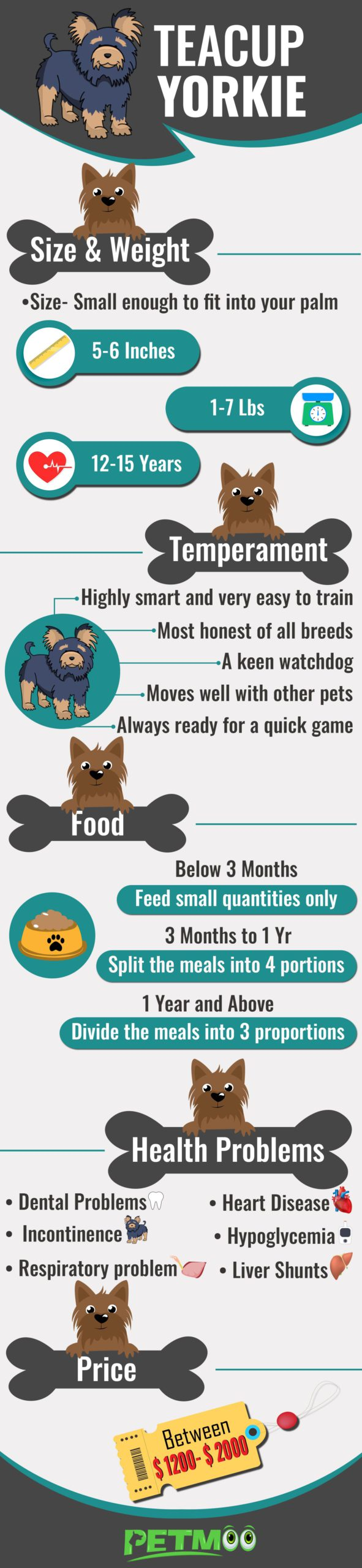Teacup Yorkie Infographic