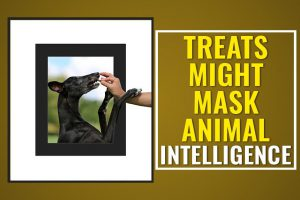 Treats Might Mask Animal Intelligence