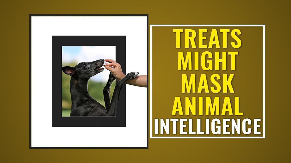 Treats Might Mask Animal Intelligence