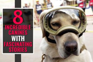 8 Incredible Canines With Fascinating Stories