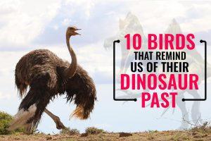 Birds That Remind Us Of Their Dinosaur Past